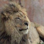 Photo de San Diego Zoo Safari Park