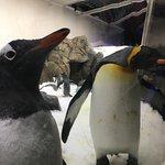 Photo de SEA LIFE Melbourne Aquarium