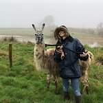 Billede af Catanger Llamas