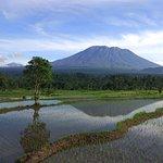 Сразу после бассейна начинаются рисовые поля. Утром, облака над Агунгом рассеиваются и..
