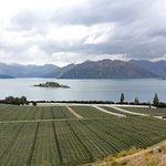 湖景及葡萄園