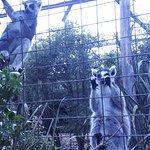 Willowbank Wildlife Reserve Foto