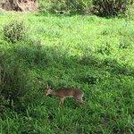 Photo of Tarangire National Park
