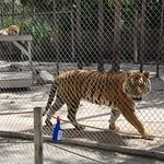 One of the big cats at the sanctuary