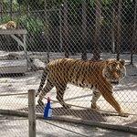 Foto de McCarthy's Wildlife Sanctuary