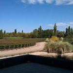 vista desde terraza a viñedos