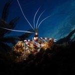 Aivy Maes Divers Paradise Resort Φωτογραφία