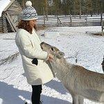 Valokuva: Orbas Reindeer Farm