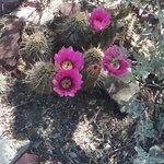 Photo de Arizona-Sonora Desert Museum