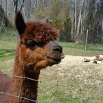 Photo de Jersey Shore Alpacas