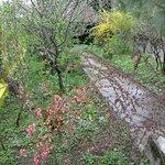 Sring enters the Casanova`s garden