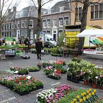A Large Variety of Different Plants at the Bloemenmarkt