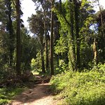 Sintra 3 Forests Walk Hike