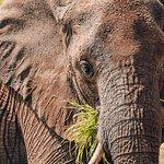 The massive Elephants of Tarangire National Park