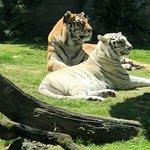 Regal cats