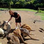 feeding the kangaroors