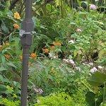 Foto de Western Colorado Botanical Gardens