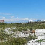 These wild donkeys were just a few yards from the riding surface.