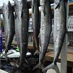صورة فوتوغرافية لـ Ms.B.Haven Fishing & Eco Charters