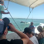 They said you will almost always see dolphins on the boat ride.