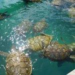 Large sea turtles