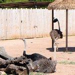 emu/ ostrich