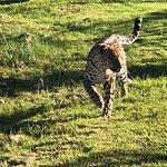 Foto de Tenikwa Wildlife Awareness Centre