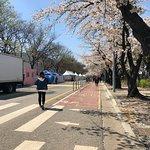 Zdjęcie Yeouido Park