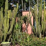 sedikit dari koleksi kaktus