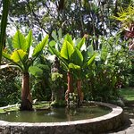 taman ala Bali