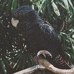 Wildlife Habitat Port Douglas Foto
