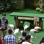 NICELY CARVED VARIOUS SHOW OF BIRDS IN JURONG BIRD PARK