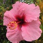 Foto de Paleaku Gardens Peace Sanctuary