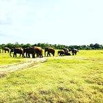 Tour Ceylon照片