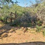 Bilde fra Marakele Animal Sanctuary