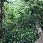 Ebony Forest tour