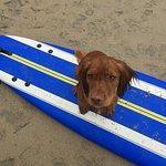 Mount Hawke Surf Academy Photo