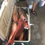 Snapper, grouper that we caught