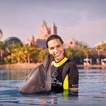 Dolphin Bay Foto