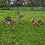 The deers - there are a lot more than this and you can get close enough for good pics
