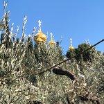 Photo of Garden of Gethsemane