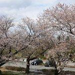桜も咲いてて得した感じでした