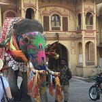 Elephant waiting before its turn in the Festival.