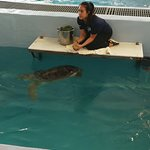 Photo de Clearwater Marine Aquarium