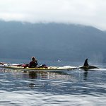 Johnstone straight, Northern Vancouver island.Orca base camp 4 day tour