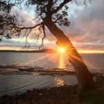 Portland island, arbutus point.