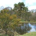 Lime avenue pond