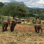 Photo of Pinnawala Elephant Orphanage
