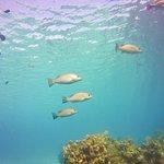 Foto de Mayan Divers
