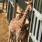Bild från ZSL Whipsnade Zoo